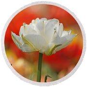 White Tulip Weisse Gefuellte Tulpe Round Beach Towel