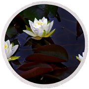 Round Beach Towel featuring the photograph White Water Lilies by Nina Ficur Feenan