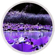 Round Beach Towel featuring the photograph White Water Lotus In Violet by Shawna Rowe