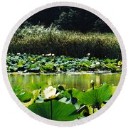 Round Beach Towel featuring the photograph White Water Lotus  by Shawna Rowe