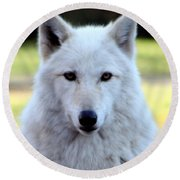 White Wolf Close Up Round Beach Towel