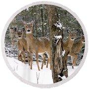 Whitetail Deer Odocoileus Virginianus Round Beach Towel