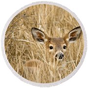 Whitetail In Weeds Round Beach Towel