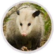 Who Says Possums Are Ugly Round Beach Towel