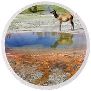 Round Beach Towel featuring the photograph Wild And Free In Yellowstone by Teresa Zieba