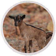 Wild Baby Goat Round Beach Towel by DejaVu Designs