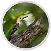 Red Bellied Woodpecker Round Beach Towel by Christina Rollo