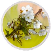 Wild Cherry Blossom Cluster Round Beach Towel by Jane McIlroy