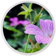 Round Beach Towel featuring the photograph Wild Geranium Flowers by Clare Bevan