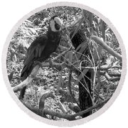 Round Beach Towel featuring the photograph Wild Hawaiian Parrot Black And White by Joseph Baril