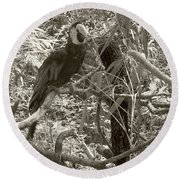 Round Beach Towel featuring the photograph Wild Hawaiian Parrot Sepia by Joseph Baril