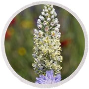 Round Beach Towel featuring the photograph Wild Mignonette Flower by George Atsametakis