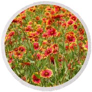 Round Beach Towel featuring the photograph Wild Red Daisies #1 by Robert ONeil