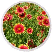 Round Beach Towel featuring the photograph Wild Red Daisies #4 by Robert ONeil