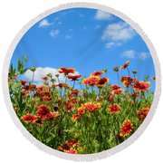 Round Beach Towel featuring the photograph Wild Red Daisies #5 by Robert ONeil