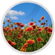 Round Beach Towel featuring the photograph Wild Red Daisies #7 by Robert ONeil