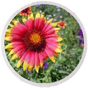 Round Beach Towel featuring the photograph Wild Red Daisy #1 by Robert ONeil