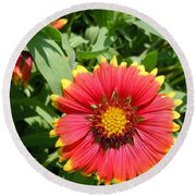 Round Beach Towel featuring the photograph Wild Red Daisy #2 by Robert ONeil