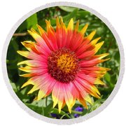 Round Beach Towel featuring the photograph Wild Red Daisy #3 by Robert ONeil