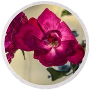 Wild Rose Round Beach Towel by Jane Luxton