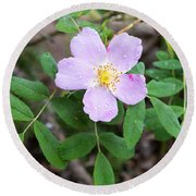 Round Beach Towel featuring the photograph Wild Gentian by Michael Chatt