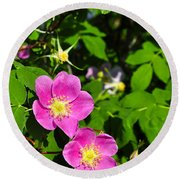 Round Beach Towel featuring the photograph Wild Roses by Cathy Mahnke