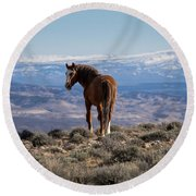 Wild Stallion Of Sand Wash Basin Round Beach Towel