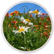 Round Beach Towel featuring the photograph Wild White Daisies #1 by Robert ONeil