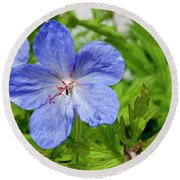 Round Beach Towel featuring the photograph Wildflower by Rod Wiens