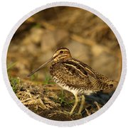 Wilson's Snipe Round Beach Towel by James Peterson