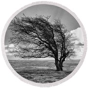 Windswept Tree On Knapp Hill Round Beach Towel