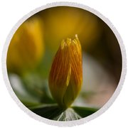 Winter Aconite Round Beach Towel