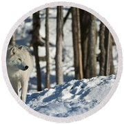 Round Beach Towel featuring the photograph Winter Arctic Wolf by Wolves Only