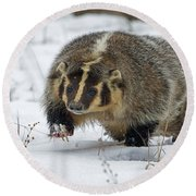 Round Beach Towel featuring the photograph Winter Badger by Jack Bell