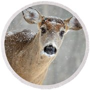 Winter Buck Round Beach Towel