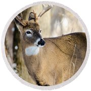 Round Beach Towel featuring the photograph Winter Buck by Steven Santamour
