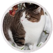 Winter Cat Round Beach Towel