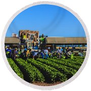 Winter Lettuce Harvest Round Beach Towel by Robert Bales