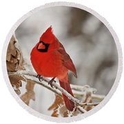 Winter Northern Cardinal Round Beach Towel by Lana Trussell