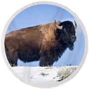Round Beach Towel featuring the photograph Winter Warrior by Jack Bell