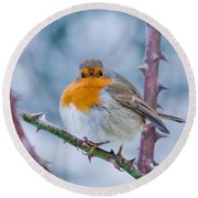 Winters Here Round Beach Towel by Scott Carruthers