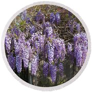 Wisteria Flowers In Bloom, Sonoma Round Beach Towel