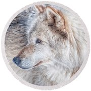 Round Beach Towel featuring the photograph Wolf In Disguise by Bianca Nadeau