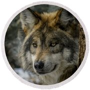 Wolf Upclose 2 Round Beach Towel