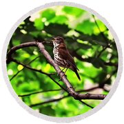 Wood Thrush Singing Round Beach Towel