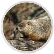 Round Beach Towel featuring the photograph Woodchuck by James Peterson