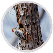 Woodpecker And Starling Fight For Nest Round Beach Towel