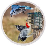Woodpeckers And Blue Jays Square Round Beach Towel