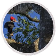 Woody Woodpecker Round Beach Towel by David Gleeson