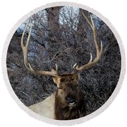 Round Beach Towel featuring the photograph Wyoming Elk by Michael Chatt